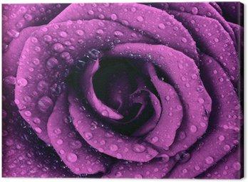 Canvastavla Lila mörk rosa bakgrund
