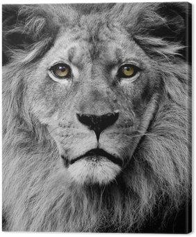 Canvastavla Lion ögon