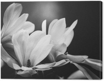 Canvastavla Magnolia blomma på en svart bakgrund
