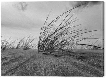 Canvastavla Marram Grass närbild i svartvitt