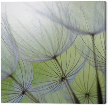 Canvastavla Maskros frö