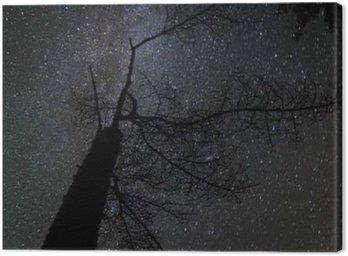 Canvastavla Milky långt landskap
