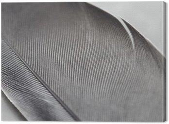 Canvastavla Närbild av en fjäder