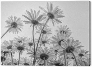 Canvastavla Närbild av vita blommor tusenskönor