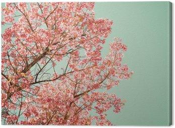 Canvastavla Natur bakgrund av vackra träd körsbär rosa blomma på våren - tappning pastell färgfilter