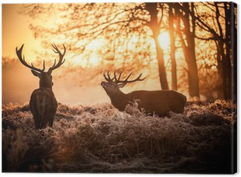 Canvastavla Red Deer i morgonsol.