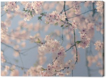 Canvastavla Retro Filter Cherry Blossom