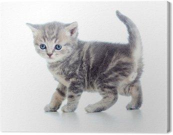 Canvastavla Rolig gång kattunge isolerad på vitt
