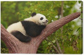 Canvastavla Sleeping giant panda
