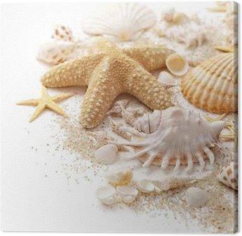 Canvastavla Snäckskal och sand på vit bakgrund