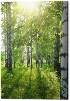 Canvastavla Sommar björkskogen med sol