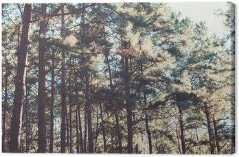 Canvastavla Tappning natur bakgrund av skog tall.