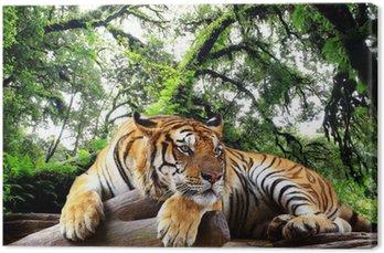 Canvastavla Tiger ser något på berget i barrskog