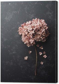Canvastavla Torkade blommor hortensia på svart vintage bords ovanifrån. Flat låg styling.