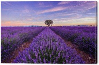 Canvastavla Träd i lavendel fält på soluppgången i Provence, Frankrike