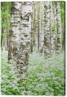 Canvastavla Trädstammar i en björkskog och vilda blommor, närbild