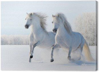 Canvastavla Två vita hästar galoppera på snö fält