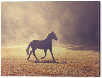 Canvastavla Vacker morgon solljus dimmig äng med inhemska brun häst.