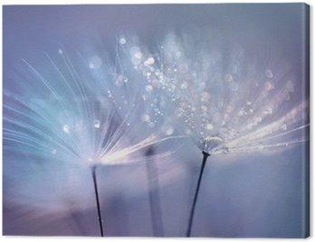 Canvastavla Vackra daggdroppar på en maskros frö makro. Vacker blå bakgrund. Stor gulddaggdroppar på en fallskärm maskros. Mjuk drömmande anbud konstnärlig bild form.