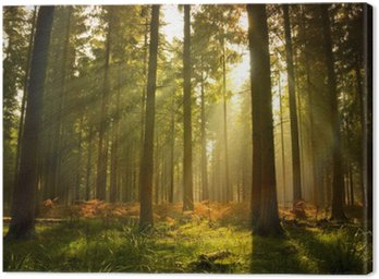 Canvastavla Vackra Forest