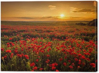 Canvastavla Vallmofält vid solnedgången