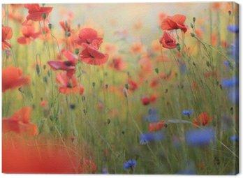 Canvastavla Vild blomsteräng med vallmo och blåklint