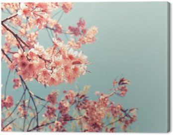 Canvastavla Vintage cherry blossom - sakura blomma. naturen bakgrund (retro filtereffekt färg)