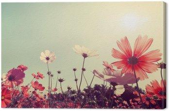 Canvastavla Vintage liggande natur bakgrund av vackra kosmos blomma fält på himlen med solljus. retro färgton filtereffekten
