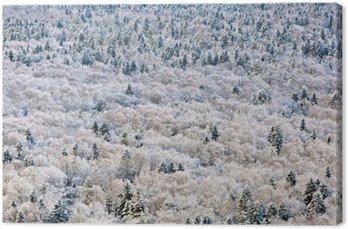 Canvastavla Vinter skog, Tver-regionen, Ryssland.