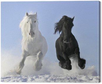 Canvastavla Vit och svart häst