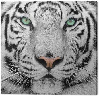 Canvastavla Vit tiger