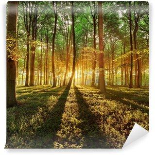 Carta da Parati Autoadesiva Foresta di primavera