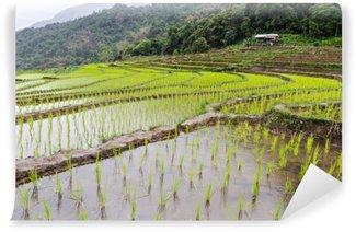 Carta da Parati Autoadesiva Piantina del riso sulle risaie del terrazzo in Chiang Mai, Tailandia