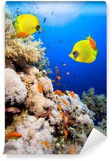 Carta da Parati in Vinile Barriera corallina e pesci farfalla mascherato