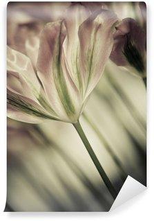 Carta da Parati in Vinile Belle Arti di close-up tulipani, offuscata e taglienti