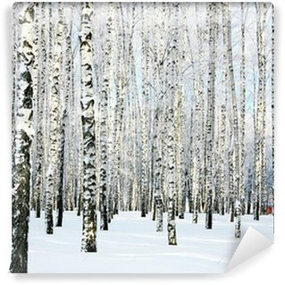 Carta da Parati in Vinile Betulla Winter forest