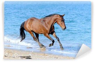 Carta da Parati in Vinile Cavallo in acqua