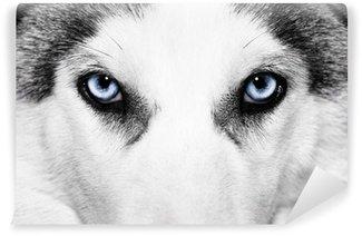 Carta da Parati in Vinile Close-up shot di cane husky