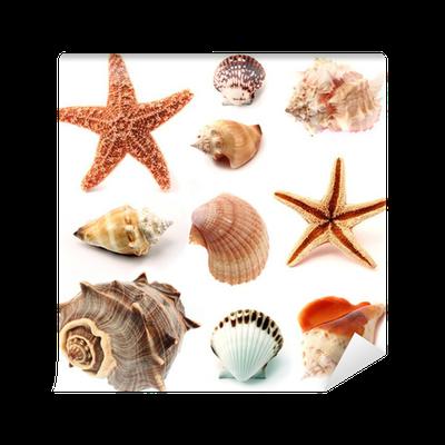 Carta da Parati Conchiglie e stelle marine set • Pixers ...