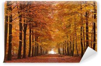 Carta da Parati in Vinile Corsia di sabbia con alberi in autunno