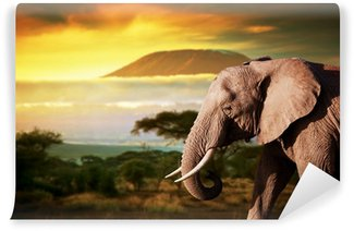 Carta da Parati in Vinile Elefante sulla savana. Monte Kilimanjaro al tramonto. Safari
