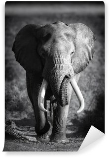 Carta da Parati in Vinile Elephant Bull (lavorazione artistica)