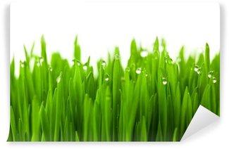 Carta da Parati in Vinile Erba fresca di grano verde con gocce di rugiada / isolato su bianco con