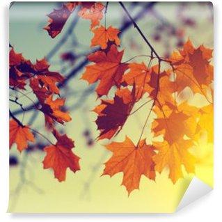 Carta da Parati in Vinile Foglie di autunno su sky