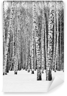 Carta da Parati in Vinile Foresta della betulla in inverno in bianco e nero