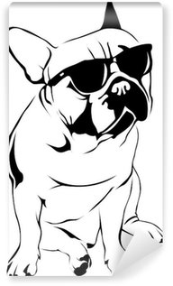 Carta da Parati in Vinile Freddo Boy - Bulldog francese