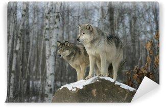 Carta da Parati in Vinile Grigio lupo, Canis lupus