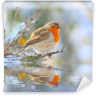 Carta da Parati in Vinile Il Robin europeo (Erithacus rubecula)