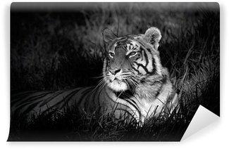 Carta da Parati in Vinile Immagine in bianco e nero di una tigre del Bengala