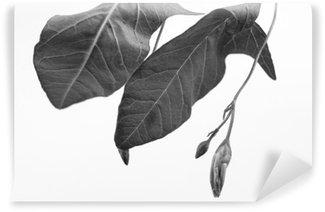 Carta da Parati in Vinile Macrophoto bianco e nero di oggetto pianta con la profondità di campo